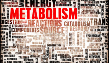 how to increase your metabolism for a better weight loss