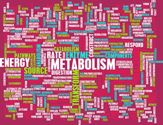 10 Ways to Increase Your Metabolism